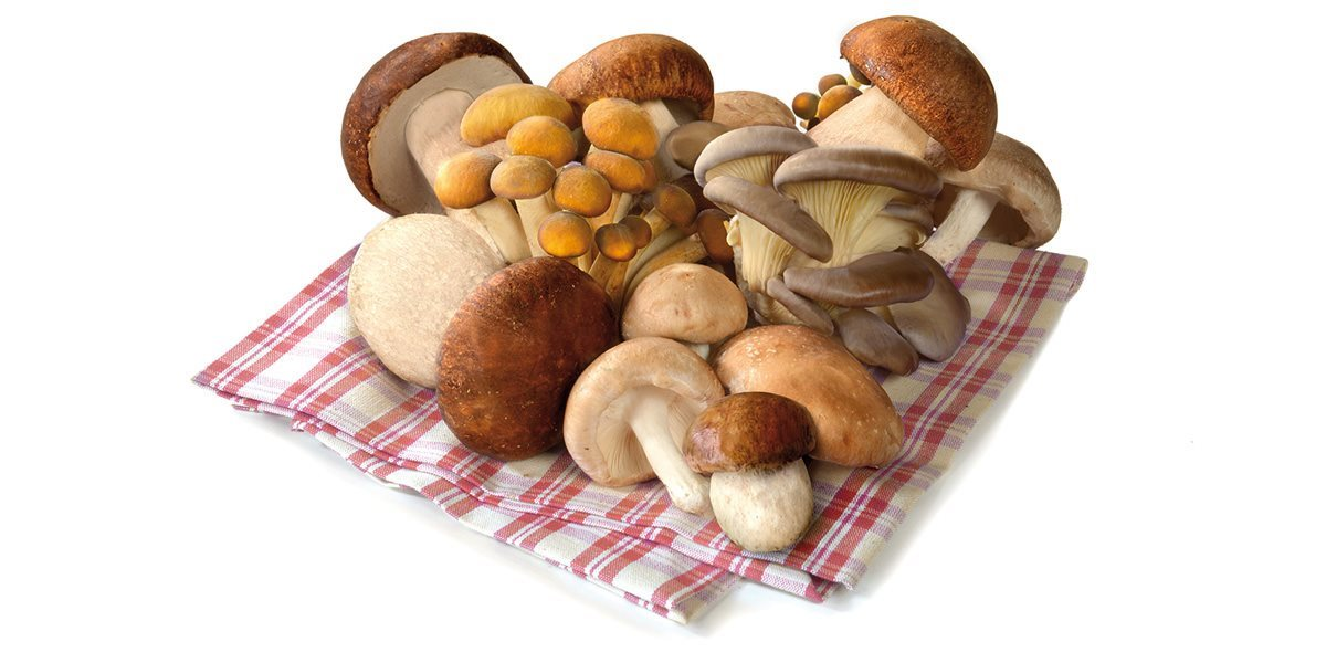 surmont_funghi-foodservice_still-life