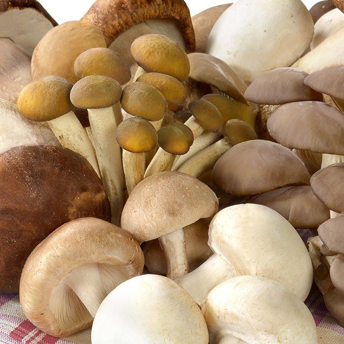 surmont_plus_foodservice_varieta-funghi(1)