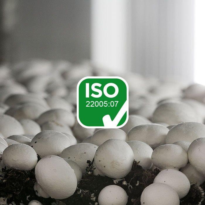 surmont_plus_industria_certificazione(1)