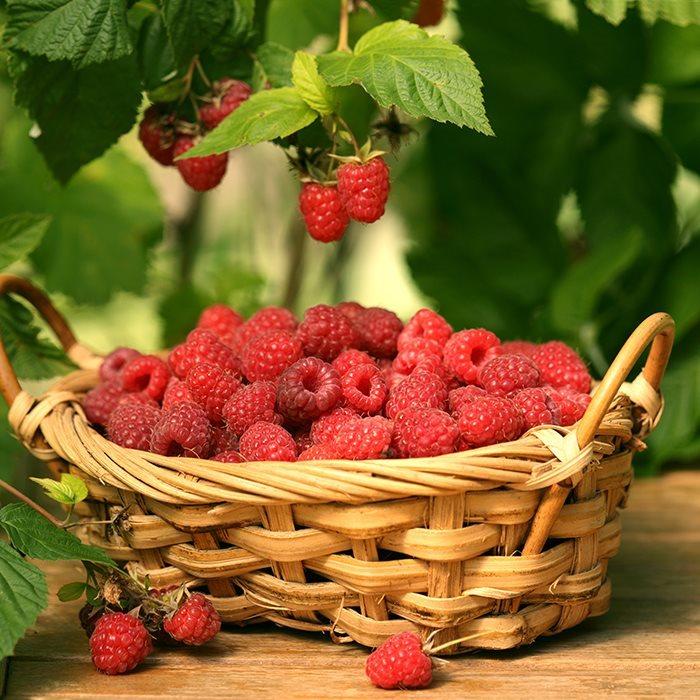 surmont_raccolta-frutta